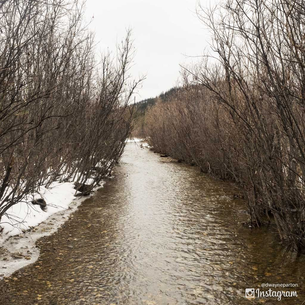 the_stampede_trail_becomes_a_creek