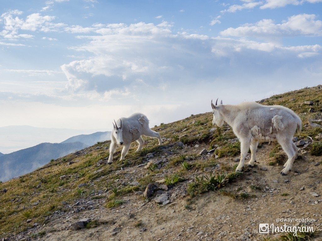 A hike up Sacajawea Peak Left me surrounded by clouds and mountain goats